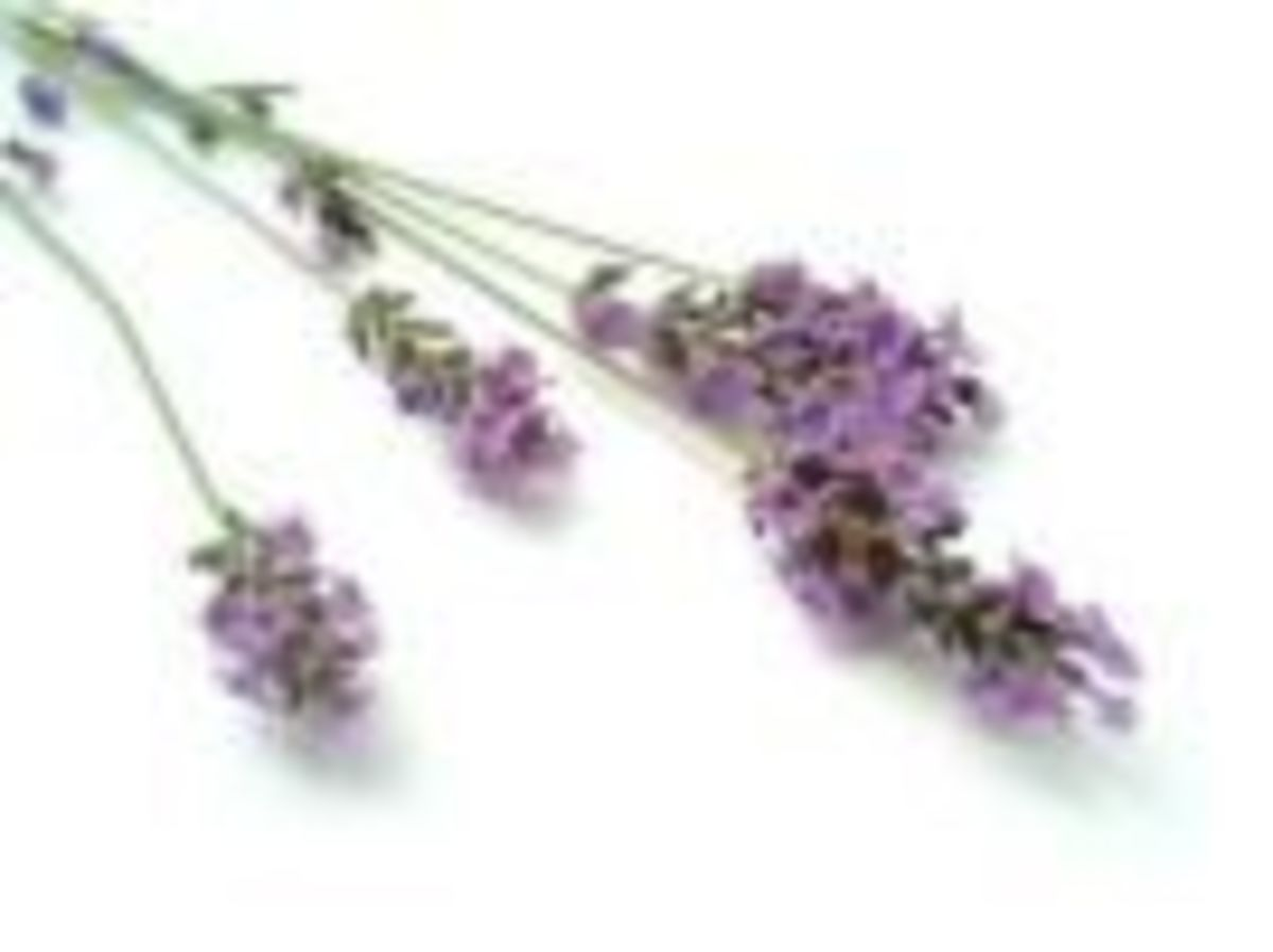 Lavender flowers work well to throw instead of rice at weddings.