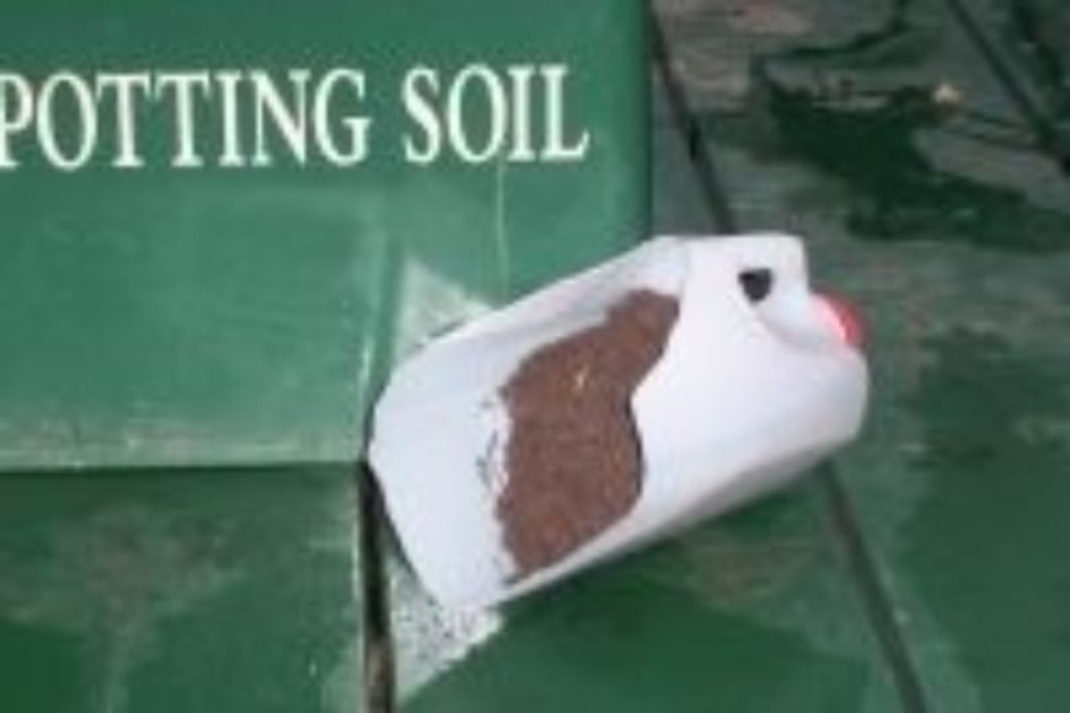 Recycle a Milk Jug as a Potting Soil Scoop