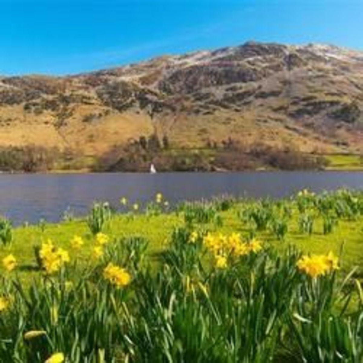 william-wordsworths-daffodils