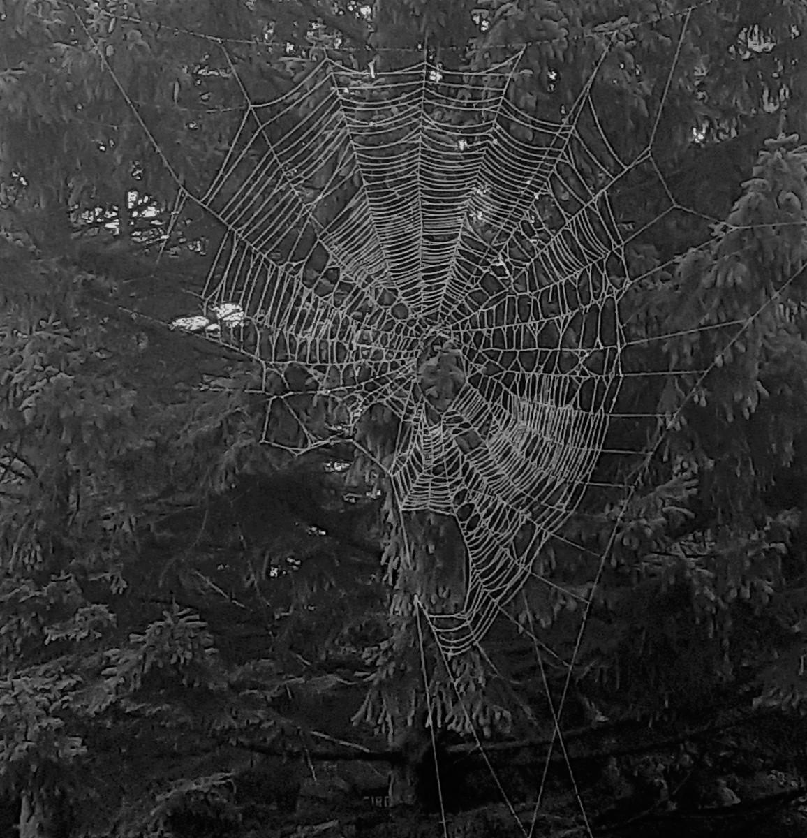 Spiderwebs and Cobwebs