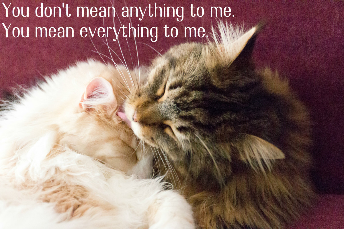 You Mean Everything To Me Quotes Poems Photos Hubpages
