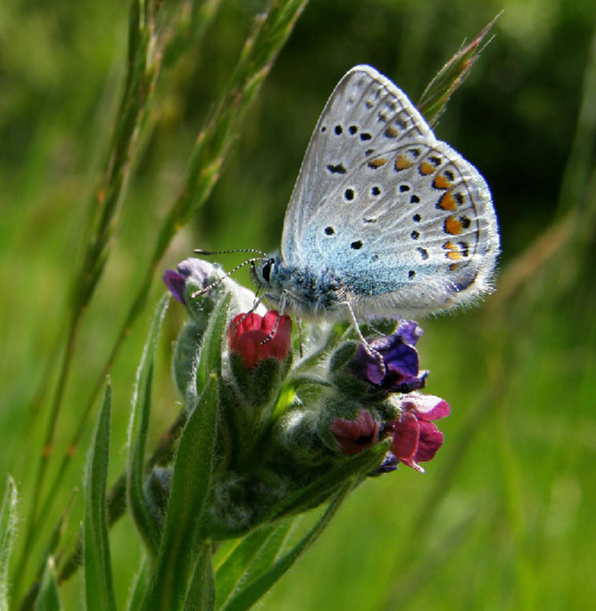 White Butterfly on Flower Buds