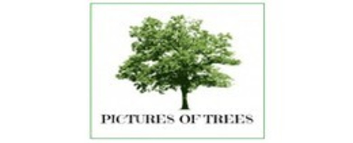 Tree Pictures