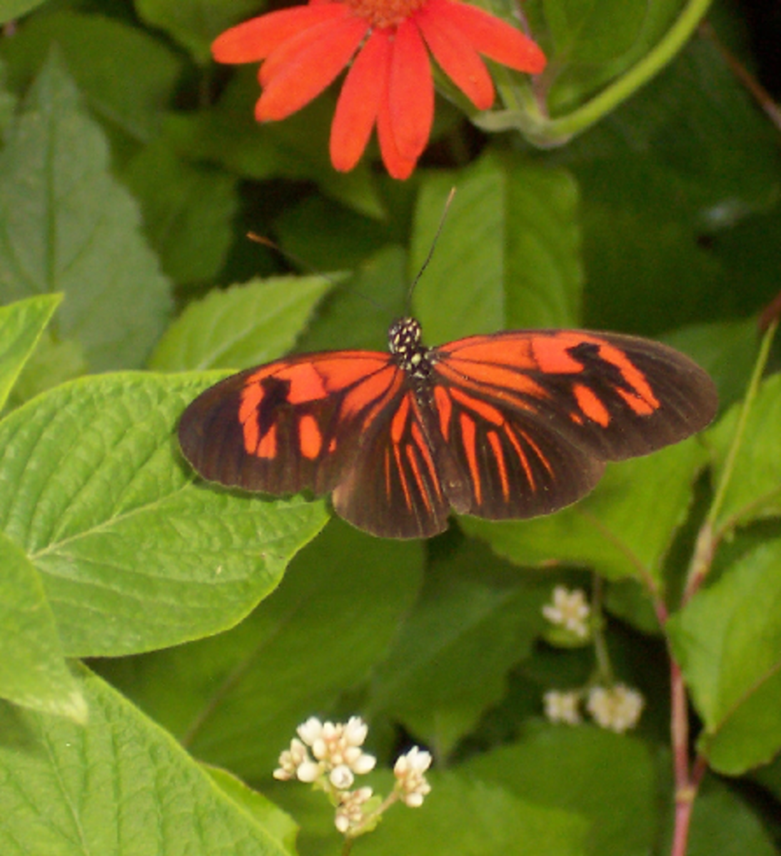 Red Butterfly with Red Flower