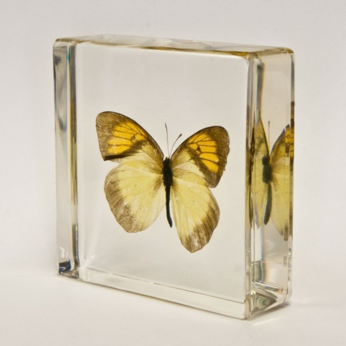 Yellow and Gold Butterfly