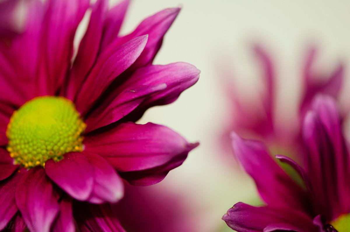 15 Dpo Pink Spotting