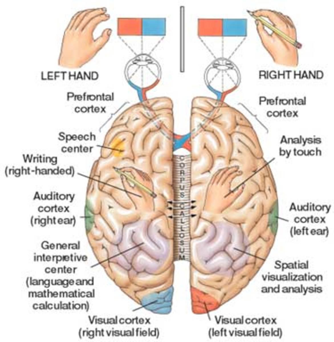 drug addiction your brain is a pinball machine