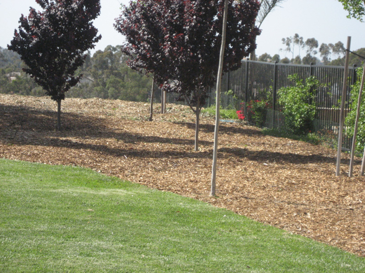 Mulching is an excellent way to control weeds and to conserve water.