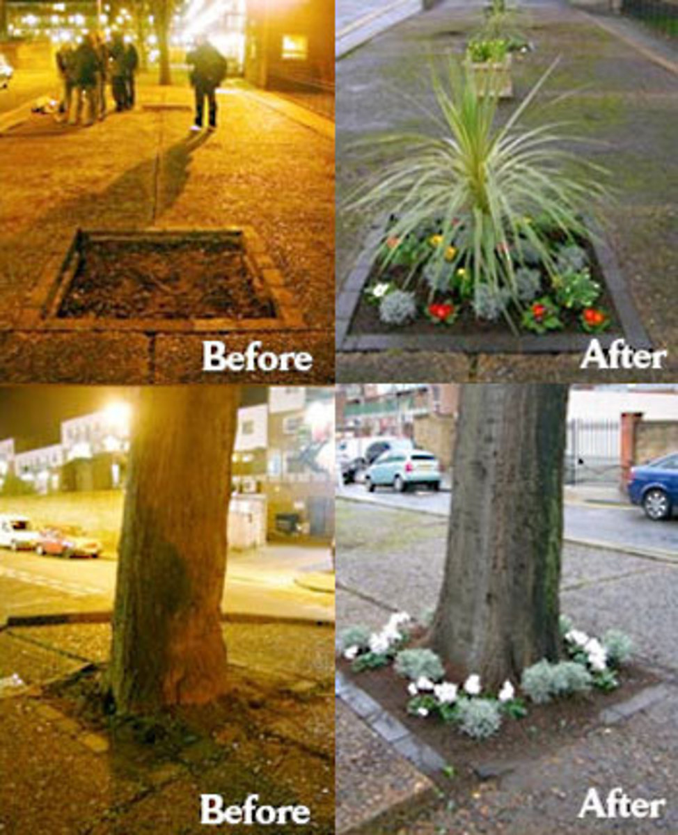 Here are some before and after pictures of the result of a beautifying guerrilla gardening project.