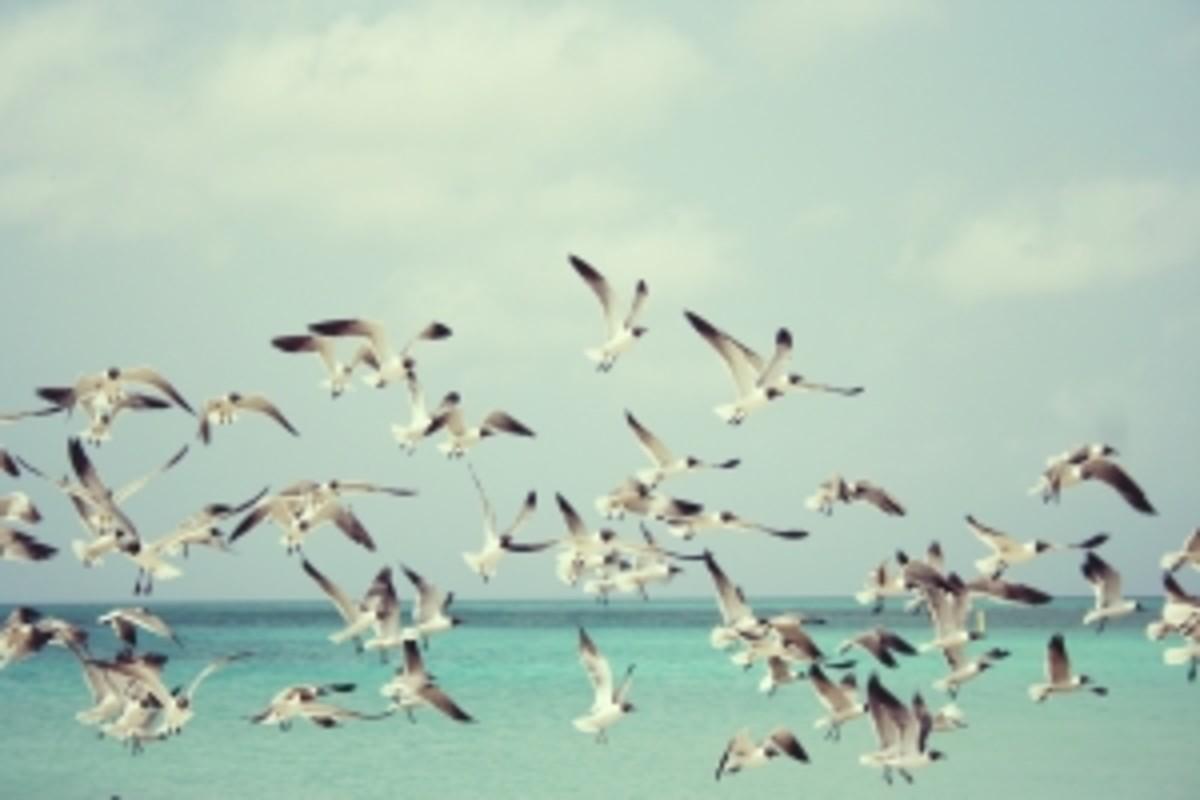 Bird Repellent: How to Scare Birds Away