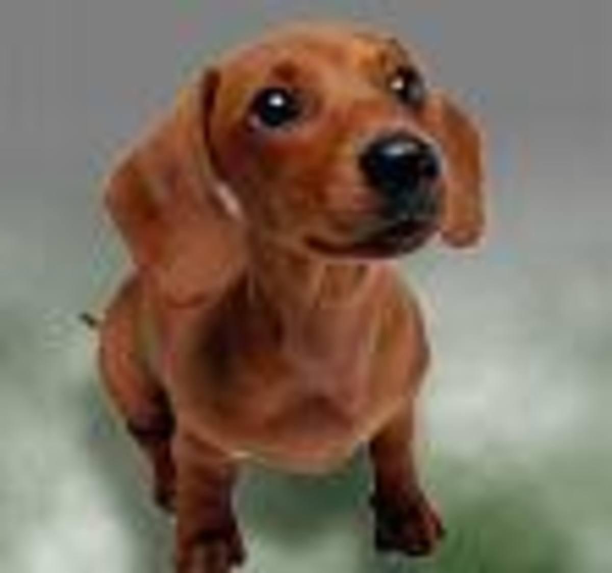 Swedish Bitters helped my dachshund breathe