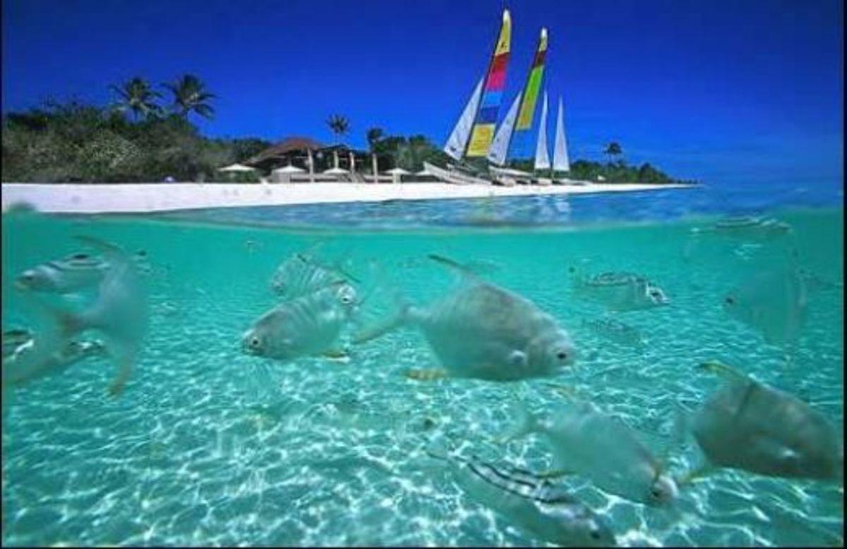 Peaceful, tranquil, beautiful Palawan. Still a virgin island, Palawan is nature at it's raw beauty.