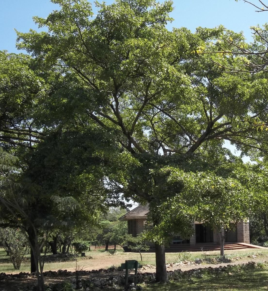 kikuyu-herbs