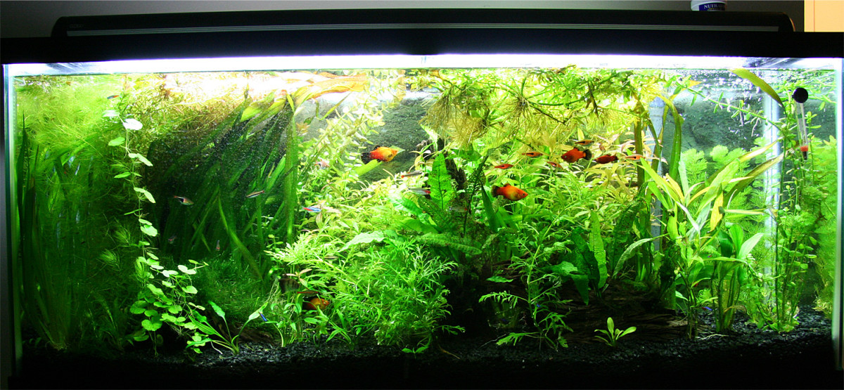 How to set up and keep a 55 gallon fish tank