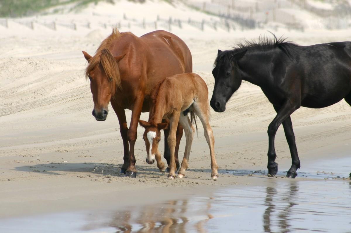 Feral horses roam the island.