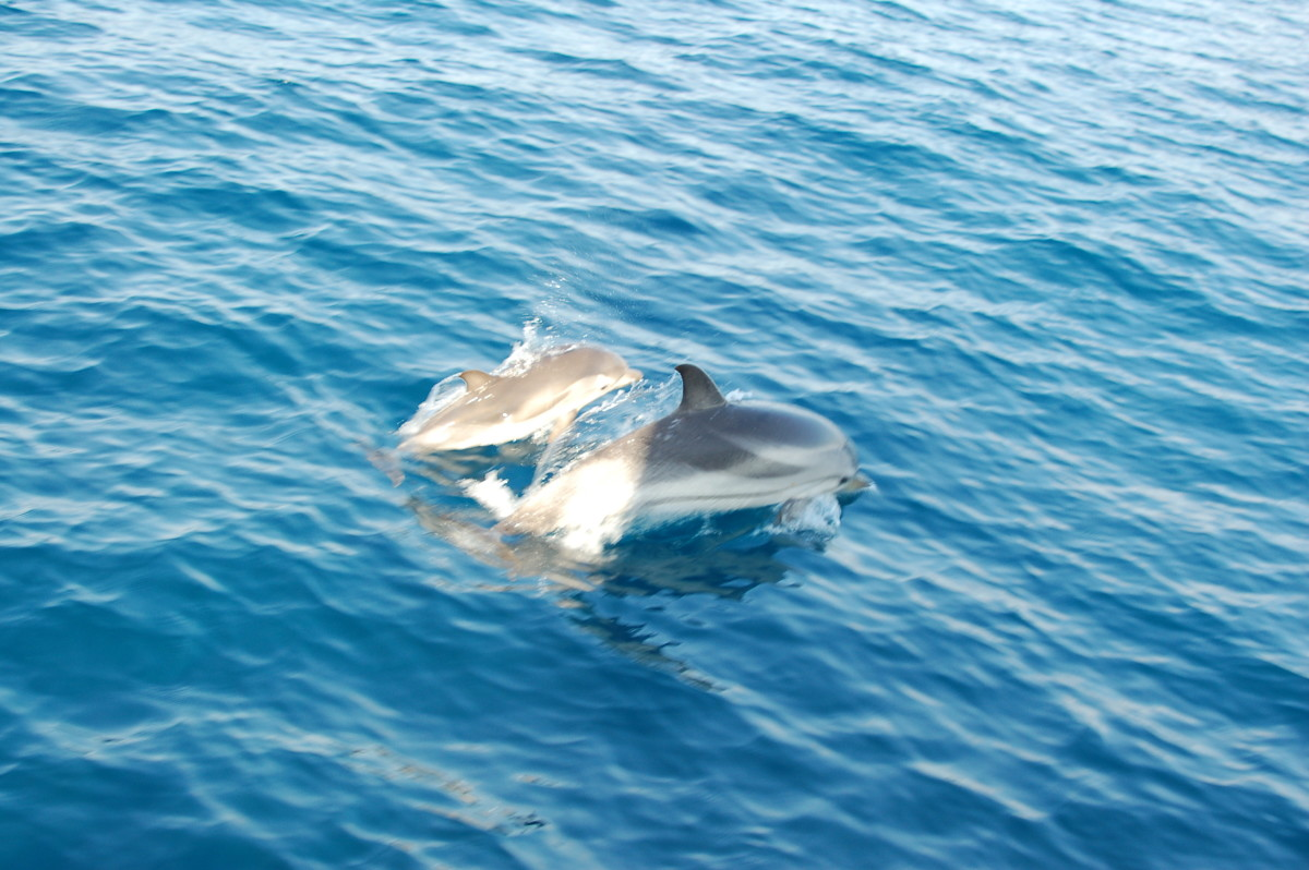 Dolphins are a common sight.