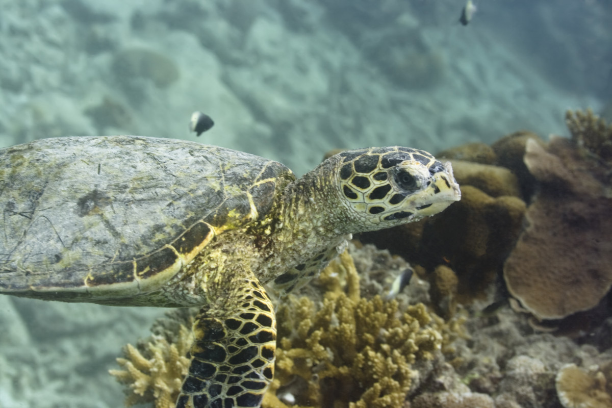 Sea turtles come ashore to lay their eggs.