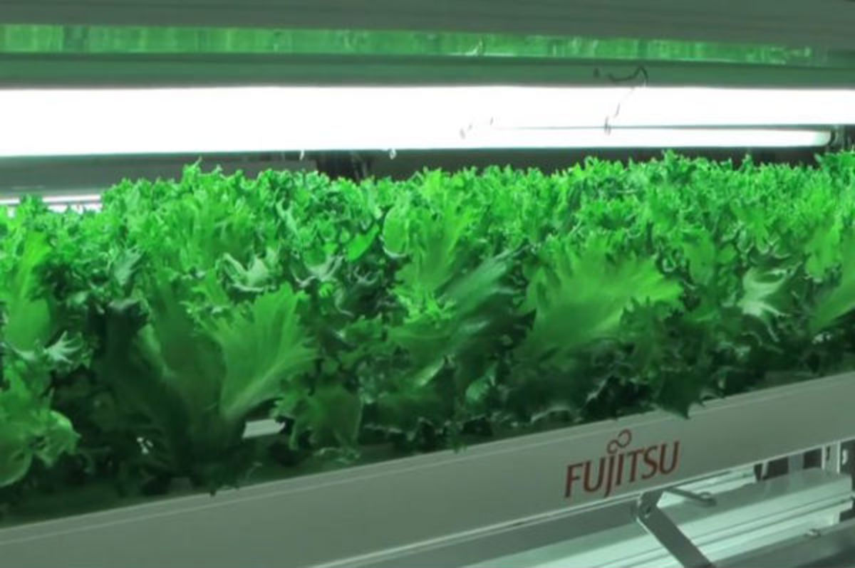 Struggling to keep up with the competition coming out of South Korea and China, Japanese electronics companies are shutting down their factories and converting them into agricultural spaces.