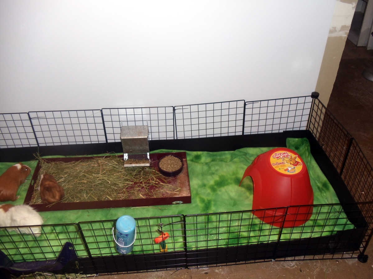 My own guinea pig rescue fleece bedding.