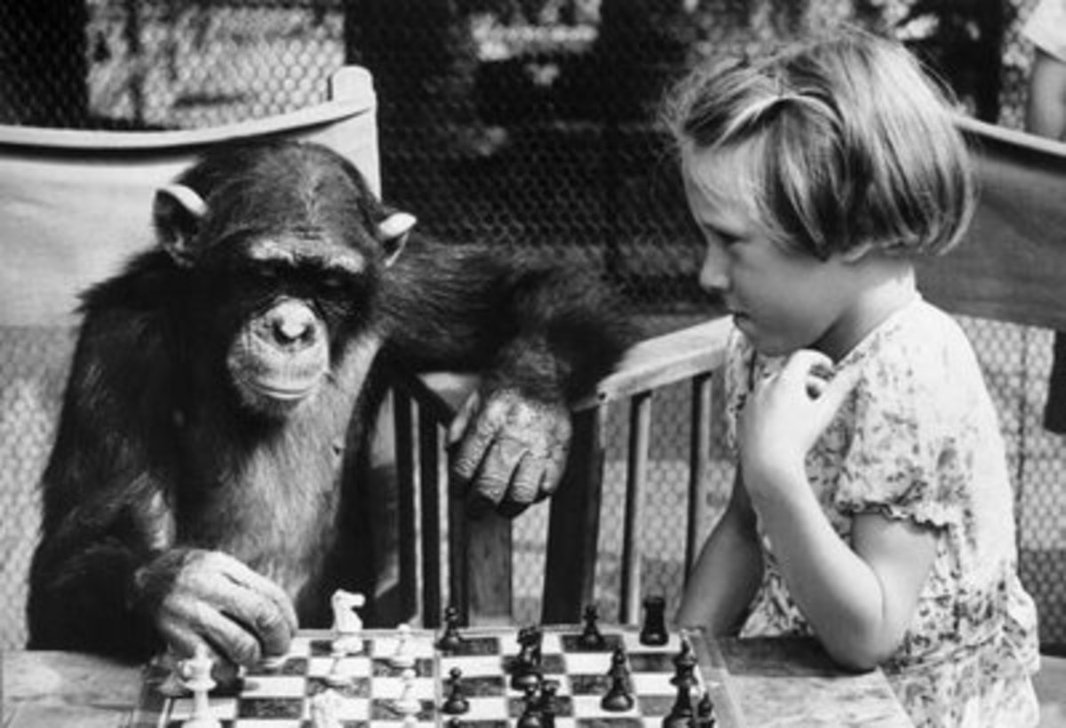 "Fifi the chimpanzee ""plays"" chess with a young London Zoo patron"