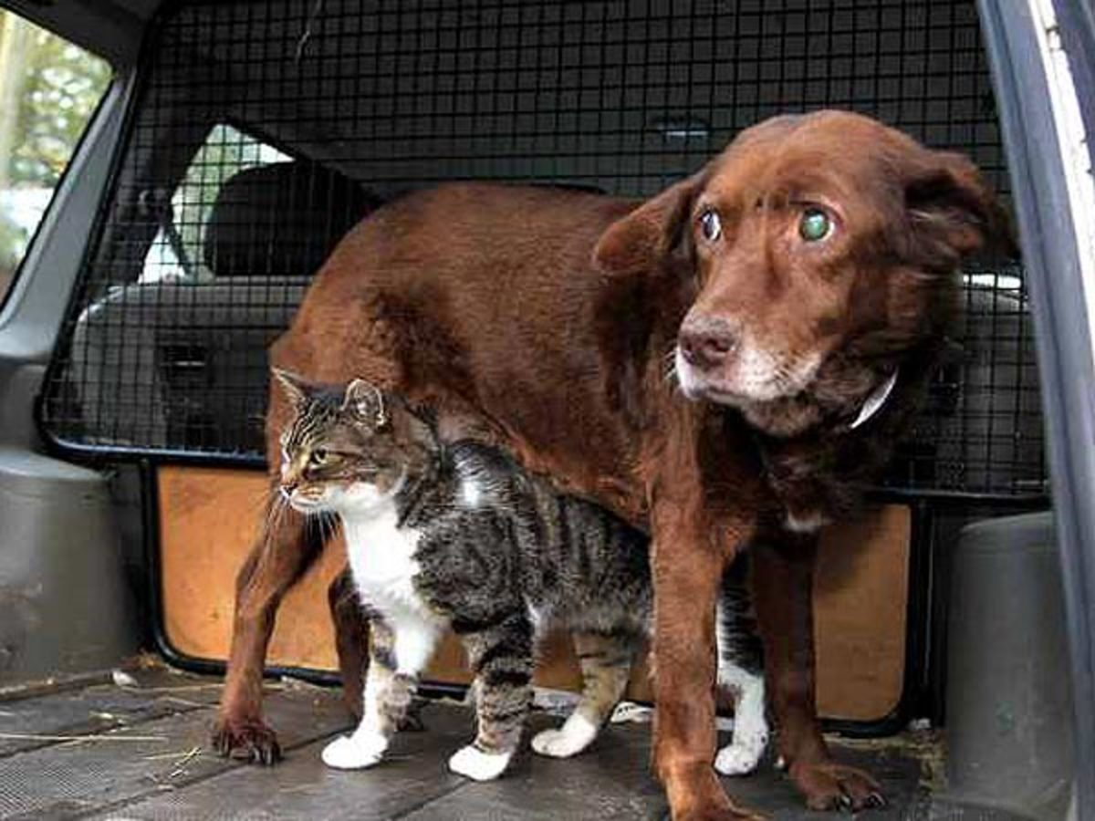 proof-of-animal-intelligence