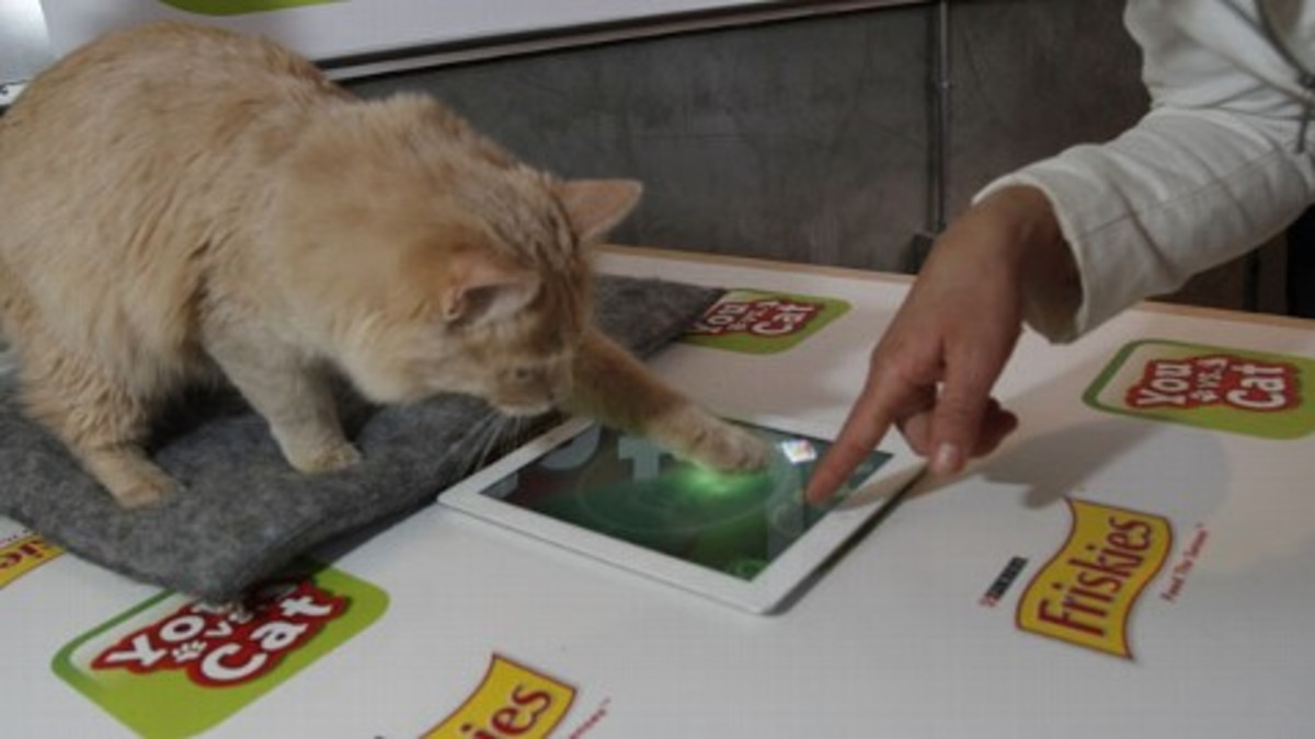 Buddy the Cat, the current game champion, demonstrated the game at the unveiling at the SXSW interactive Festival in Austin (March 2012)