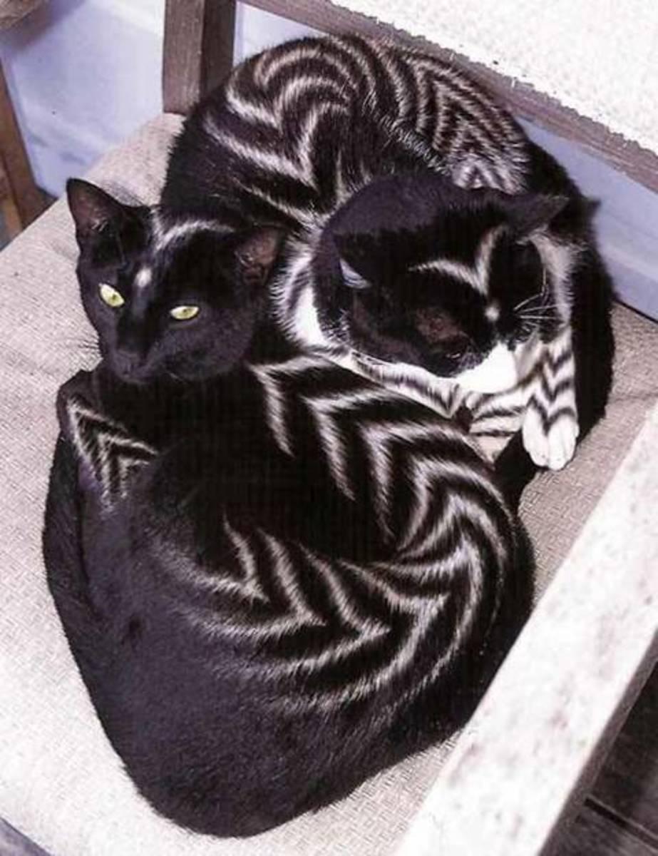 call them zebra cats?