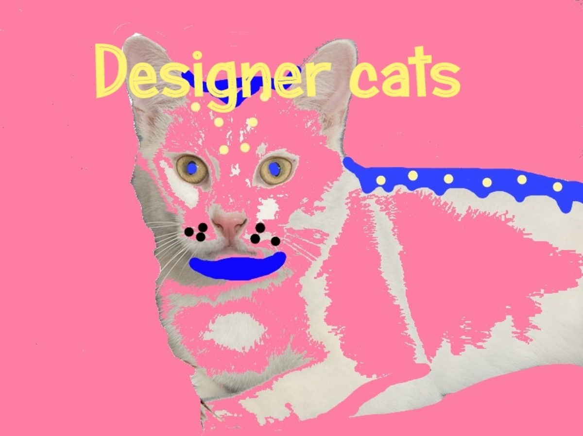 How to Make Your Own Designer Cat