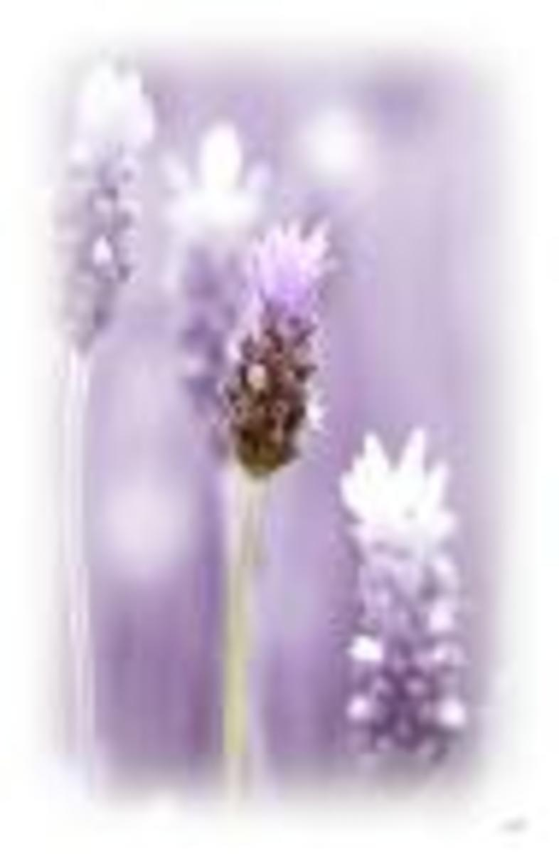 COMPANION PLANTING - Plant Guide