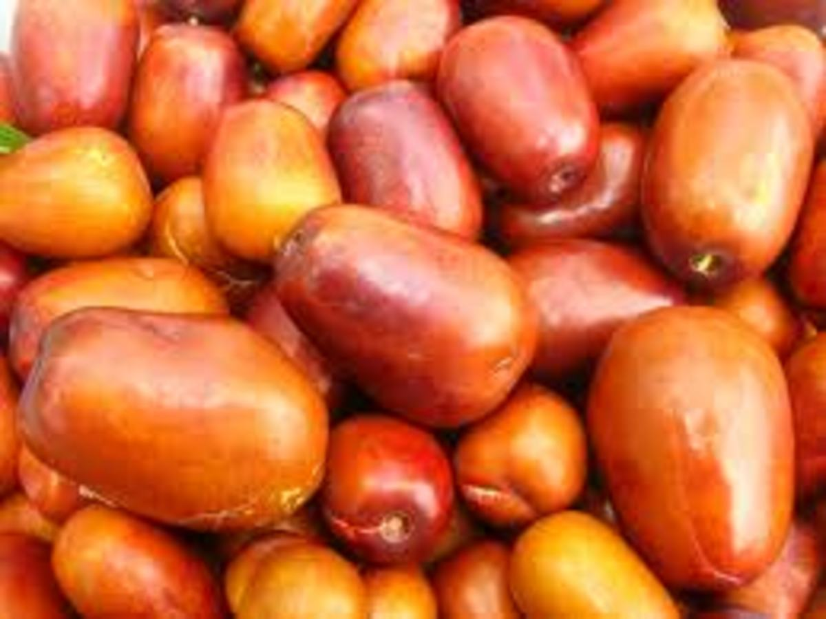 5 Medicinal Benefits of the Jujube Fruit
