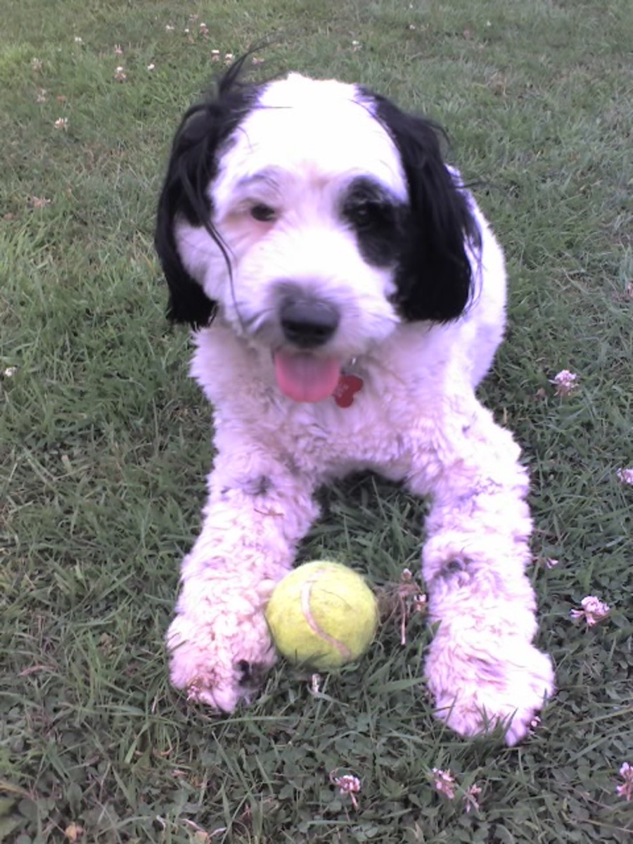 Bobby and his ball