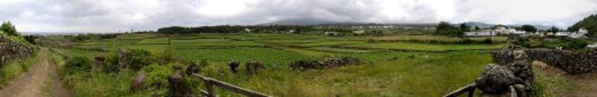 On Terceira Island, this shot was taken near the civil parish of Sao Mateus.