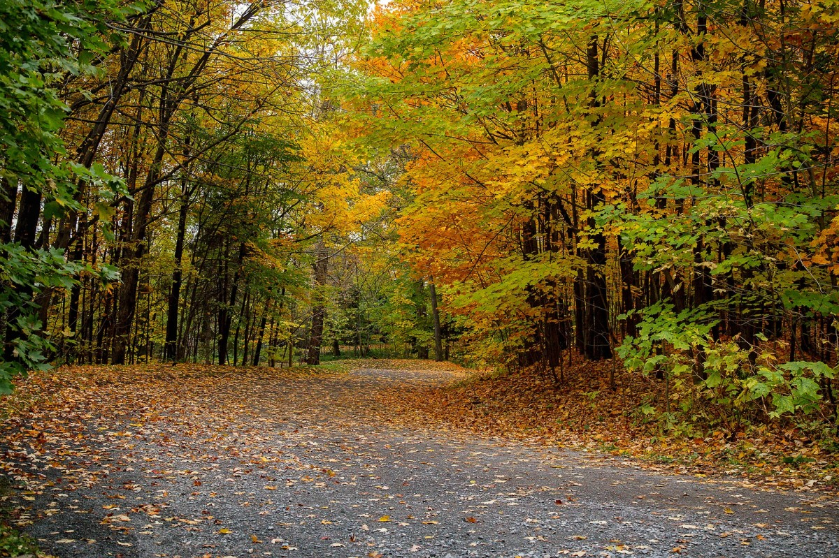 October winds Send leaves on a voyage Over country roads.