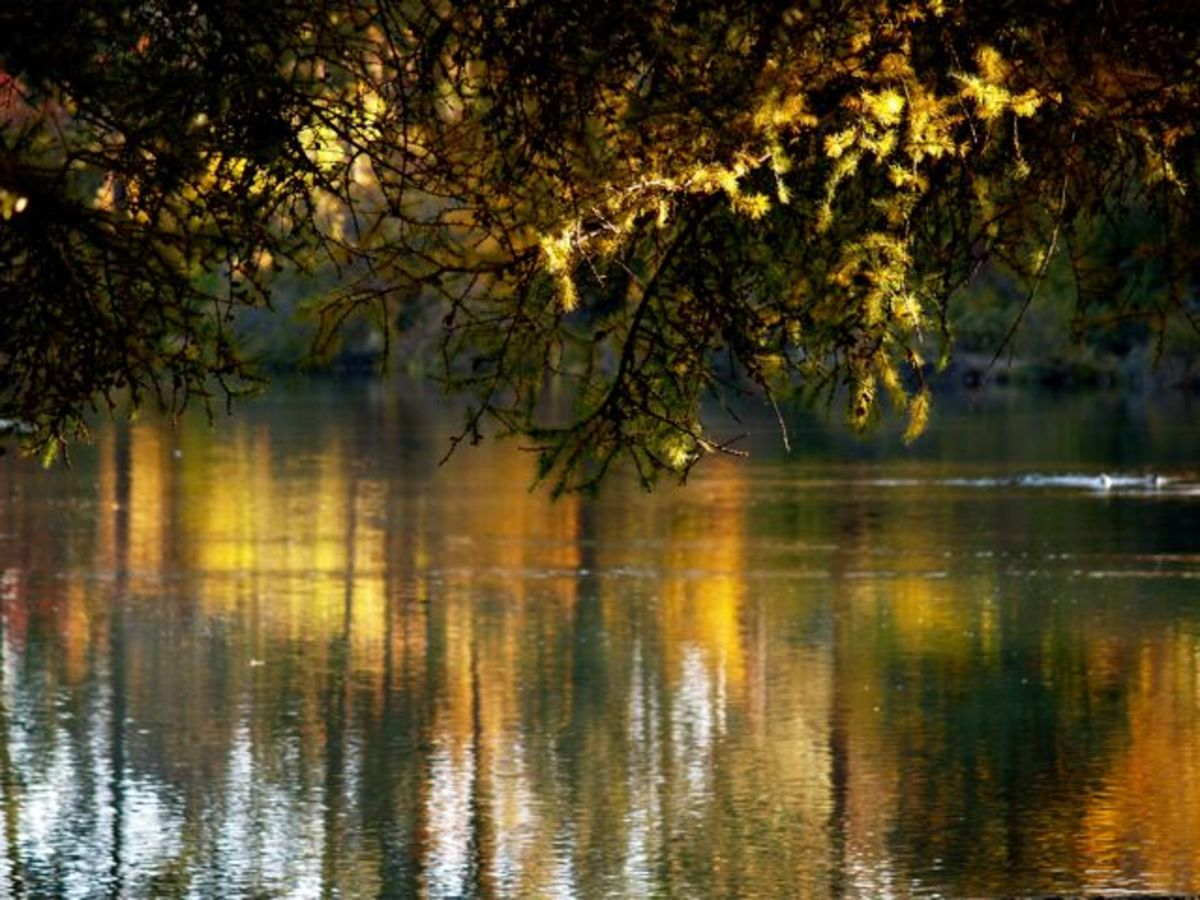 All you see in this photograph is the reflection of fall foilage