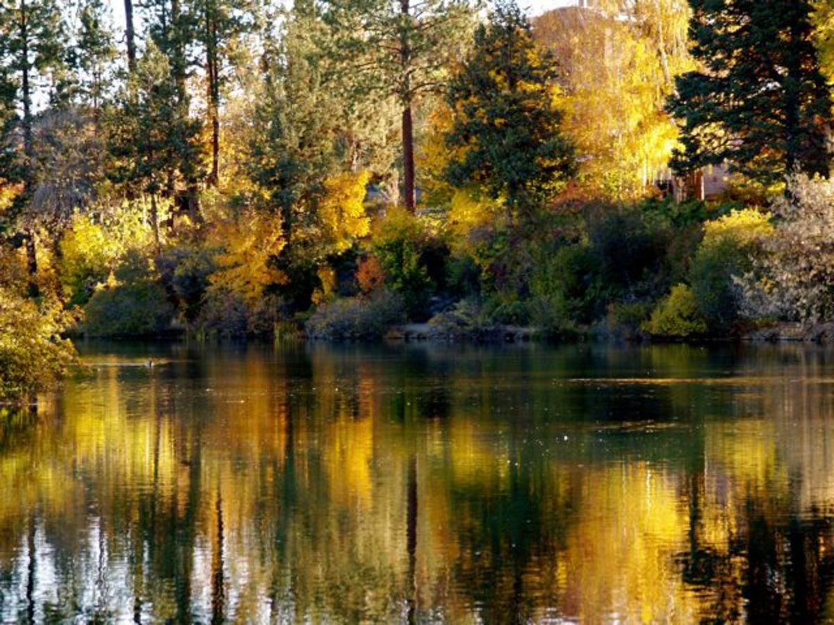 Autumn golds bleed into a quiet pond