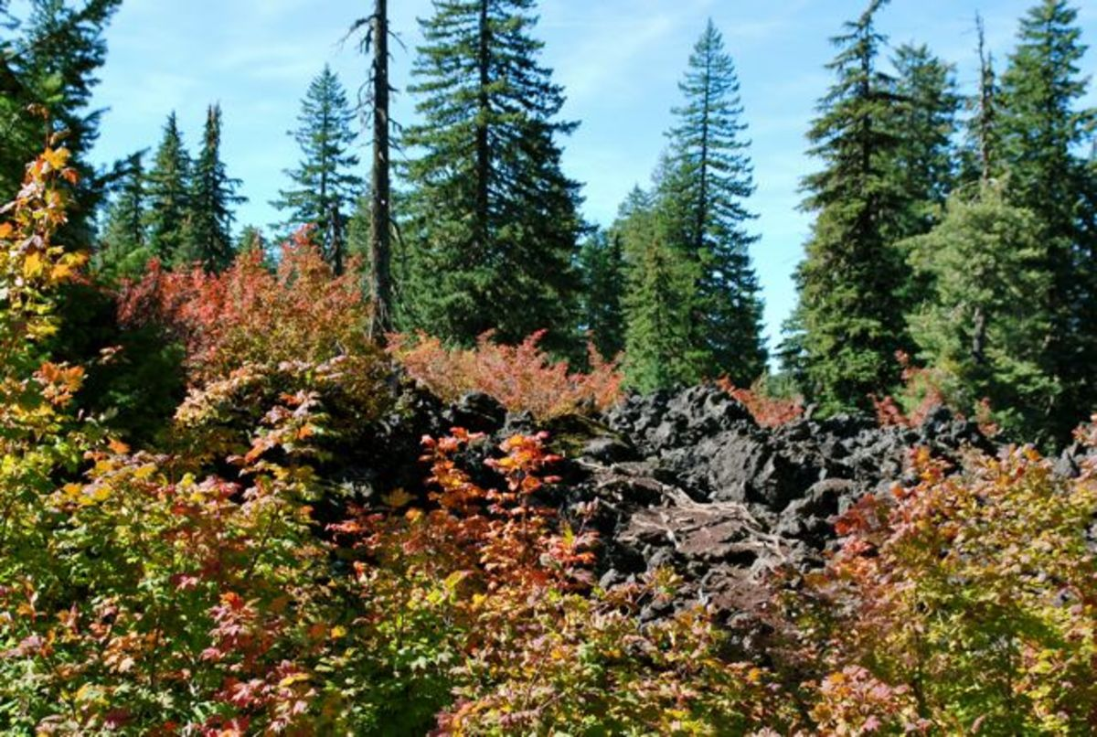 Autumn colors contrast with dark lava fields and evergreen trees