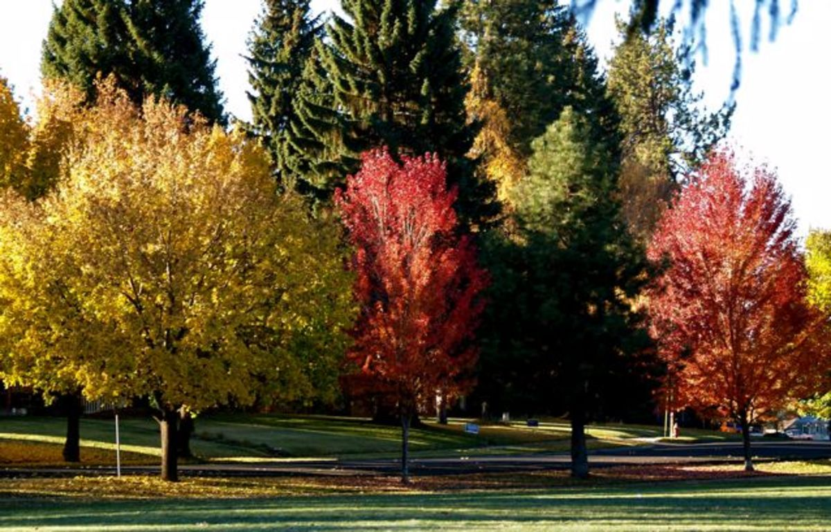 Changing colors on trees in Drake Park, Bend Oregon