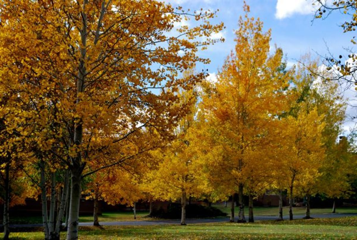 Contrasting fall colors, blue skies and green grass