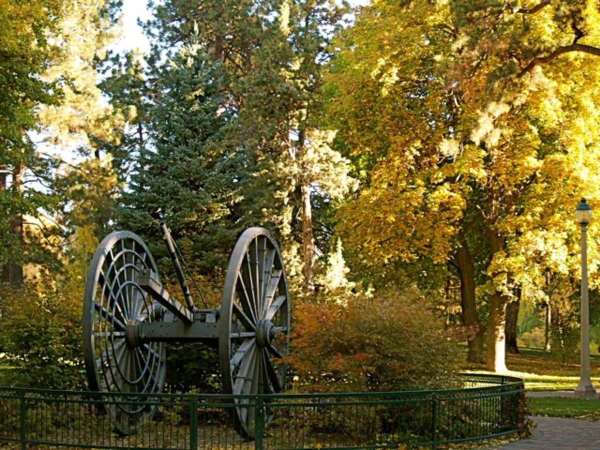 In this photo, the fall colors provide the backdrop