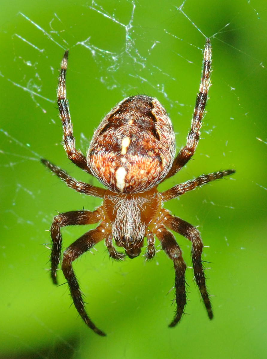 Spider Fighting And Gambling In The Philippines