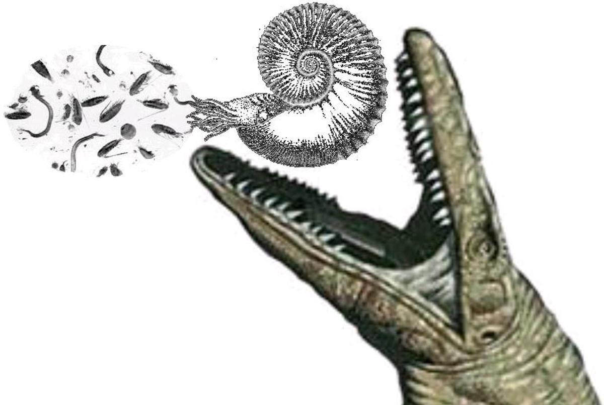Calcareous nanoplankton, foraminifera and other plankton became extinct at the K-T boundary together with the ammonites and the mosasaurs which depended on them.