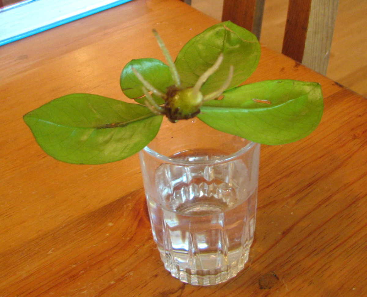 easiest-houseplant