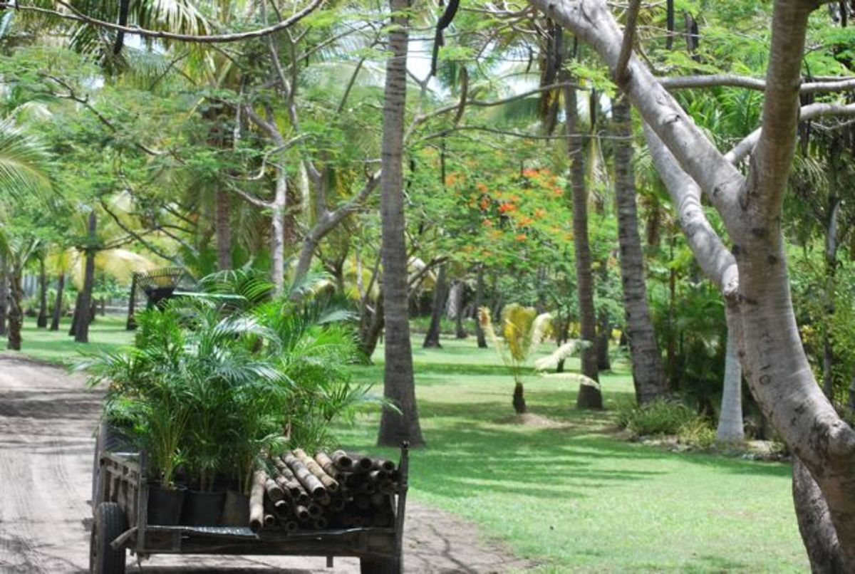 Lush green grounds at Sonaisali Island Resort in Fiji