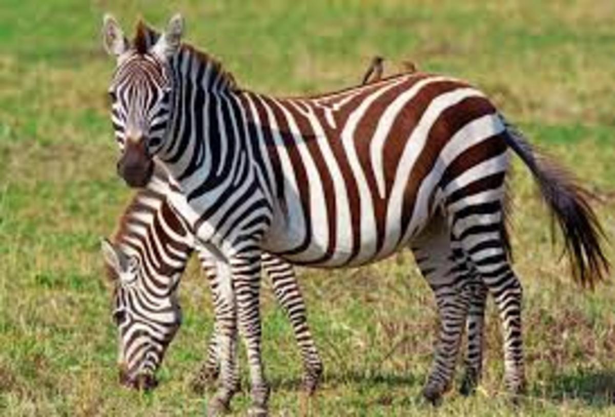 @ Madikwe Game Reserve, South Africa