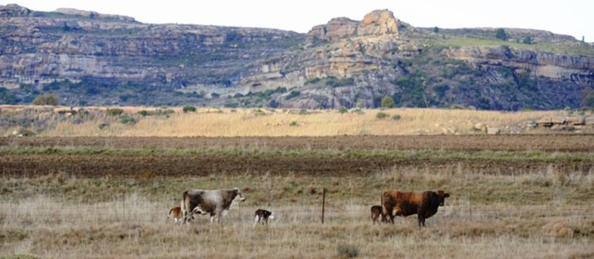 Ventersdorp region, South Africa