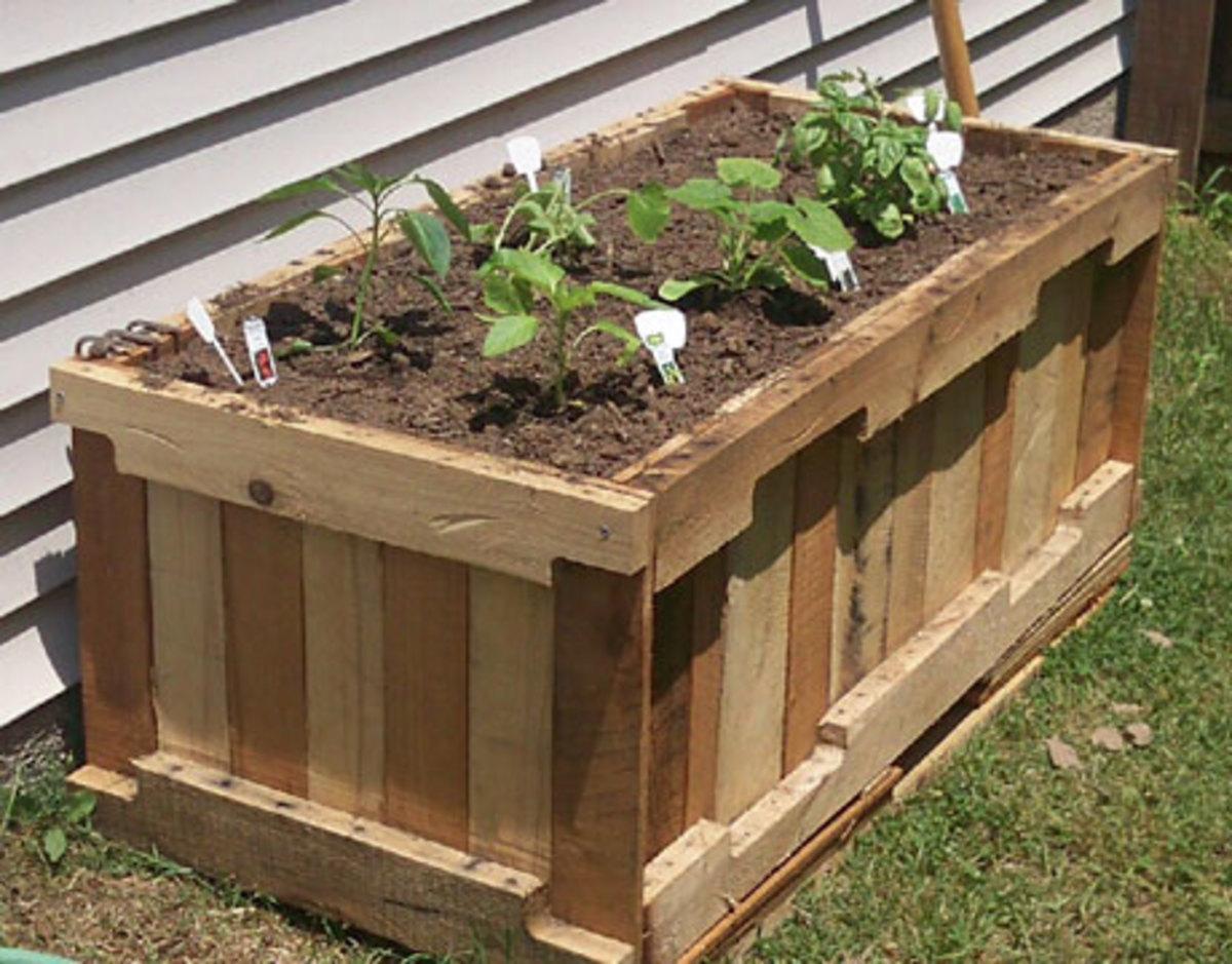 how-to-grow-plants-in-pots-pot-gardening-tips