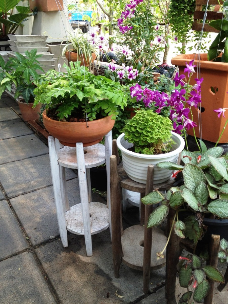 How to grow plants in pots pot gardening tips hubpages - Growing petunias pots balconies porches ...