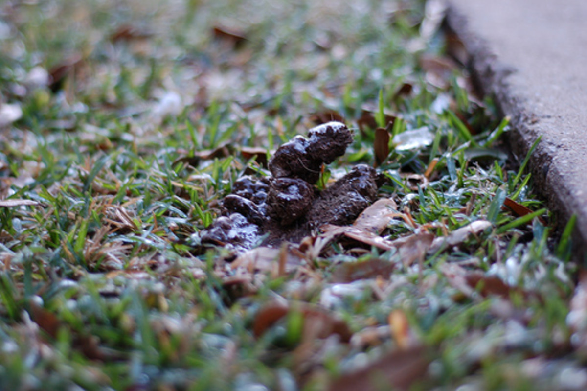 Frozen dog poo has a range of possibilities.