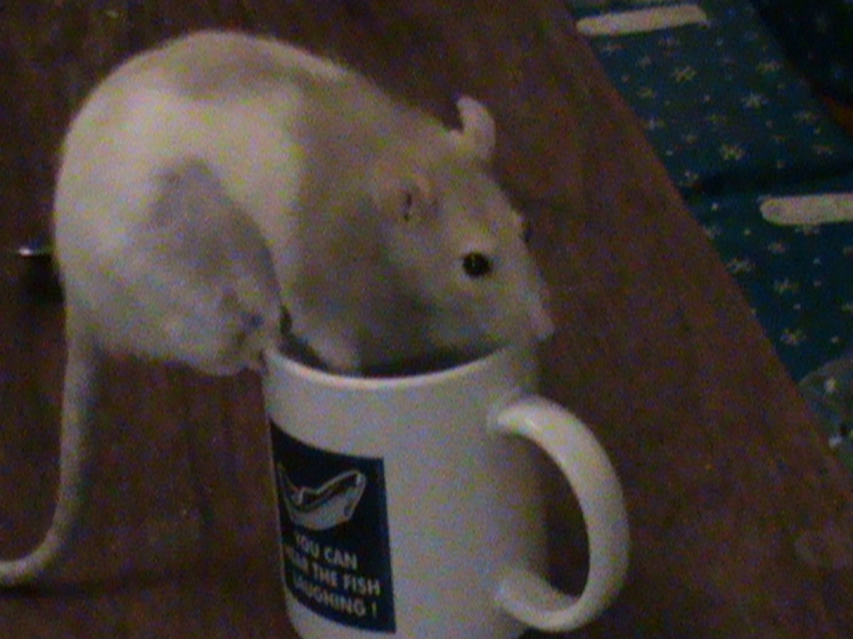 Cookie drinking coffee