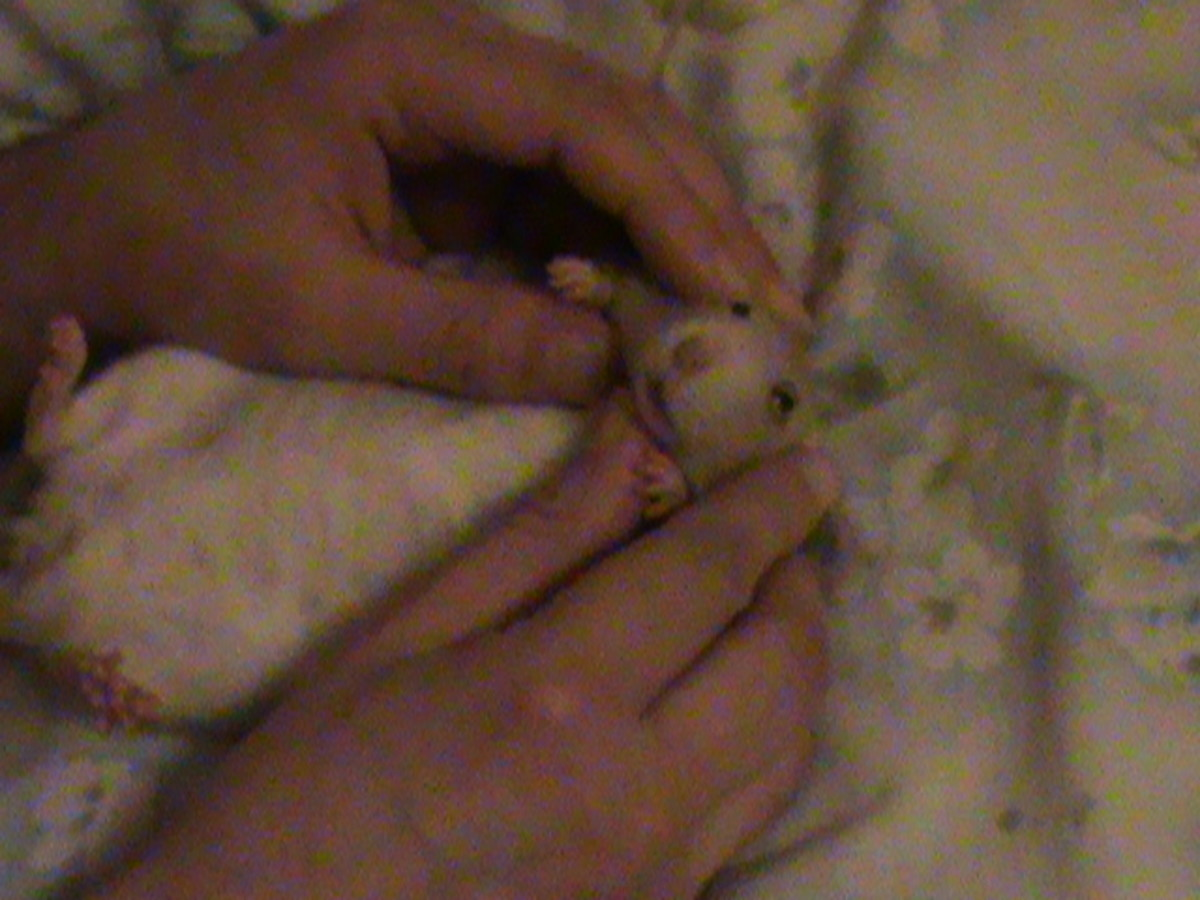 Cookie playing baby rat.